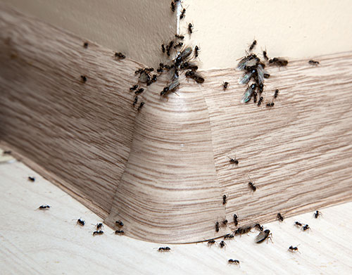 Ant Control East Lansing